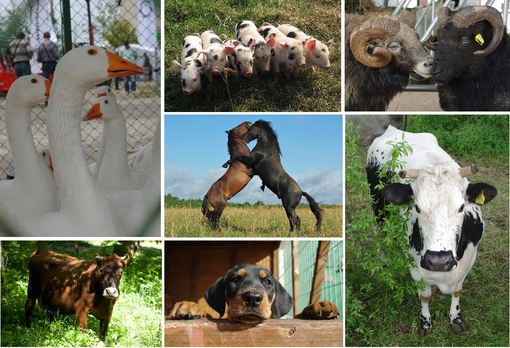 Lietuvos nykstančių ūkinių gyvūnų paroda